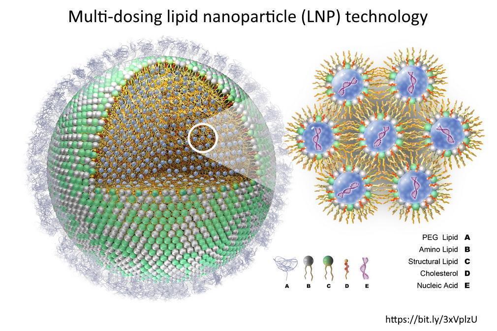 Diagram of the lipid nanoparticles surrounding the mRNA